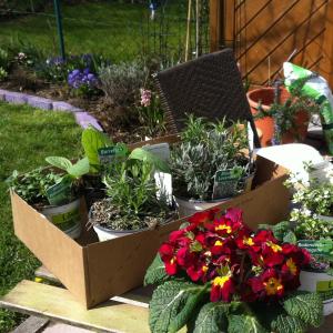 Bild einer Kiste mit Kräutern: Bohnenkraut, Borretsch, Lavendel, Oregano, Rosmarin und Thymian