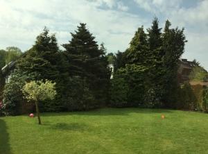 Die Südseite unseres Gartens, bepflanzt mit über dreißig Jahre alten Lebensbäumen und Rhododendronsträuchen.