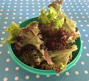 Pflücksalat und was man damit machen kann. Ein einfacher, aber sehr leckeren Griechischen Bauernsalat zum Beispiel.