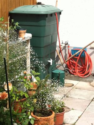 Im Vordergrund Pflanzenexplosion, im Hintergrund Schlauchchaos.