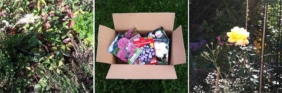 Bildcollage: Verwildertes Erdbeerbeet, Blumenzwiebeln, Beet mit Rose und Herbstanemonen.