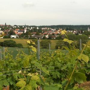 Weinanbau an der Bergstraße
