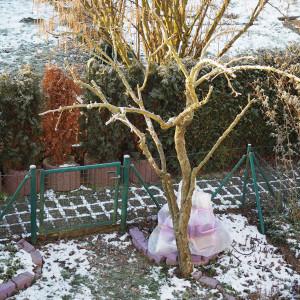 Unser Birnbaum - frisch geschnitten.