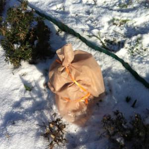 Rosmarin im Winter