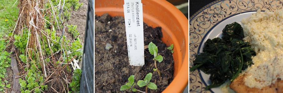 Nach dem Rückzug im Winter, treiben die Pflanzen nun erneut aus.